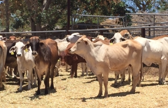 How Charters Towers is defying the drought to employ 1,000